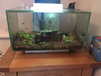 Fluval Edge tropical fish tank