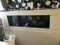 HUGE 6ft fish tank FULLY STOCKED