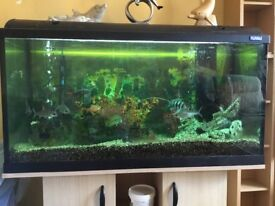 3FT FISH TANK , STAND, ALL FISH , FILTER, HEATER