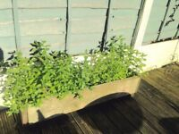 Retangular Planter