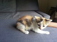 Kittens 2 for sale barking 07590580360