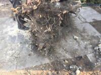 Tree Stump For Wood Burner