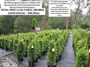 Need PRIVACY HEDGE or FENCE ALTERNATIVE? Look at These! HS101 Mudgeeraba Gold Coast South Preview