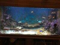 Marine fish tank compete set up (not tank) lots of rocks, corals and livestock