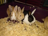 Baby bunnies - ALL RESERVED NOW