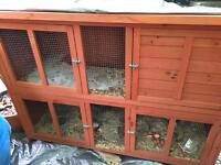 2 male guinea pigs with hutch