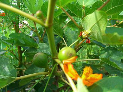 Obst und Gemüse muss zwingend angepflanzt werden
