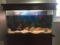COMPLETE 3FT FISH TANK SET UP with stand and equipment