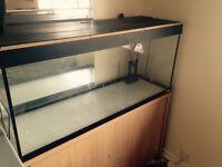 240 litre fishtank with cabinet