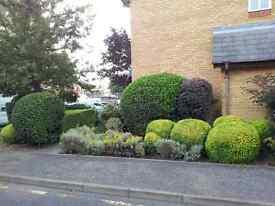 Garden maintenance,turf laying,planting in london