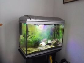 Tropical fish with tank and stand.
