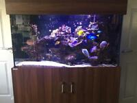 Marine aquarium (work commitment forces sale)