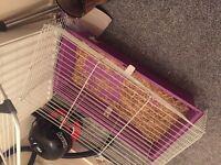 Cage rabbit gunnie pig bunnie