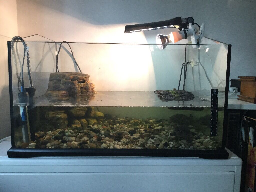 Two Musk Turtles And One Mississippi Map Turtle With Tank And Filter In Leeds West Yorkshire