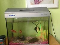 Goldfish and fishtank