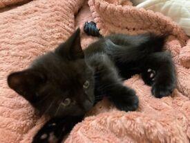 Black fluffy kitten 🐈⬛