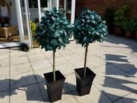 Faux Laurel trees in pots