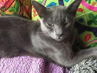 Missing cat from Hebden Bridge area