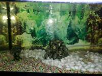 Fish tank and accesseries for sale sorry sold