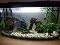 aquarium panoramic