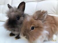 Baby rabbit, ready now