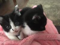 Beautiful black and white cats