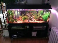 Aquarium tropical fishtank & (with or without fish, notice required to deliver to new home)120ltrs