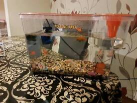 15 litre fish tank with 3 fish