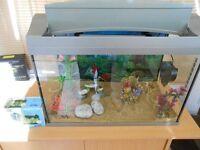 60 Litre Aquarium LED light, Filter, Ornaments, Plants & Sand