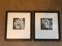 Pair of framed flower prints