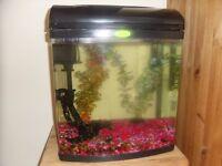 tropical fish tank set up