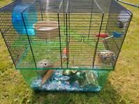 2 boy gerbils Free
