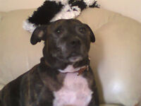 hiya im jasper urgent home needed as my owner is of ill health no time wasters plz get in touch xx