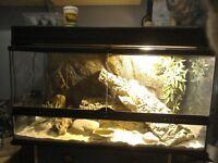 Large Vivarium Full Setup + 2 yr old Translucent Beard dragon Called Sasha