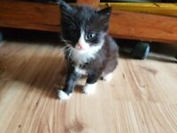 Beautiful female kittens looking for new homes