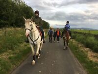 Opportunity to ride well trained horse south of Edinburgh - Thankyou everyone who replied!
