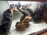 Root wood - Aquarium