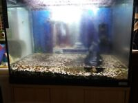 fish tank and filters ideal for a nice set up good condition