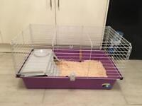 Guinea pig indoor set up