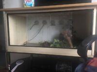 Snake/Reptile Vivarium