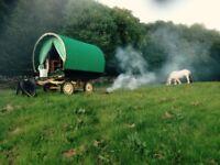 Horse-drawn Gypsy Caravan Holidays in Cumbria