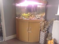 Large corner fish tank on stand