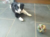 Playfull puppy!