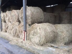 Meadow Hay from 2016 crop.