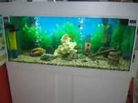 ALL NEW INCLUDING THE TANK/BESPOKE FISH TANK CABINET + LID FULL SET UP IN WHITE