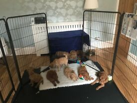 EXTRA LARGE PUPPY PLAYPEN CAGE, BOWLS, FLOORING, VET BED ALL USED ONLY ONCE SO GREAT CONDITION