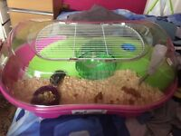 Female hamster with cage