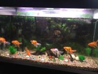 Fluval 405 Fish Tank