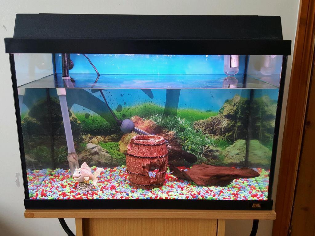 Freshwater jewel fish - Lovely Jewel Fish Tank Aquarium