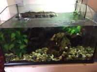 Exo terra turtle setup with turtles